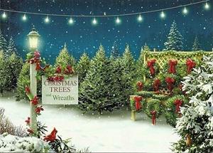 Fresh Cut Christmas Trees & Wreaths